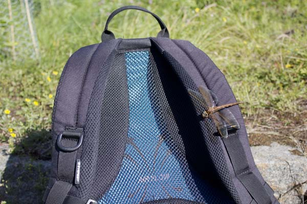 Dragonfly on my backpack